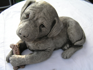 Labrador Welpe liegend - Labrador Pup laying