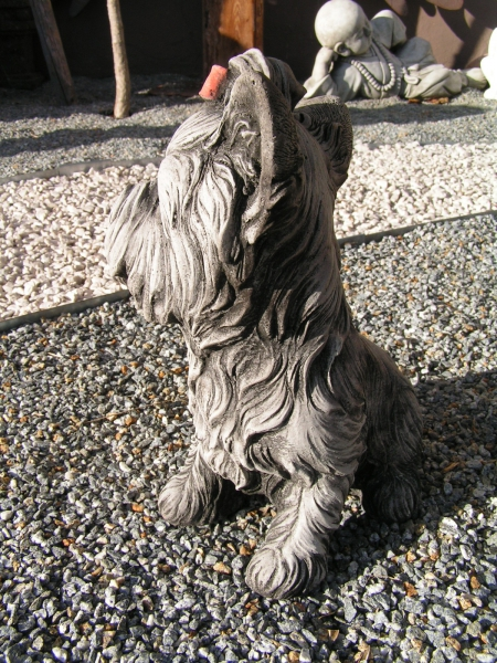 Yockshire Terrier